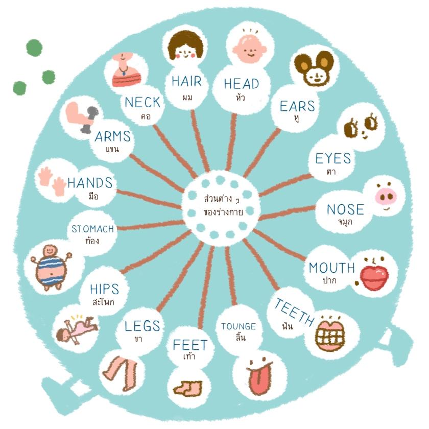 คำศัพท์ภาษาอังกฤษหมวดอวัยวะและส่วนต่าง ๆ ของร่างกาย
