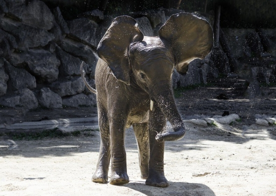 elephant-3060526_960_720
