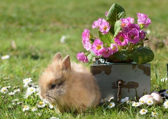 rabbit-4123027_960_720