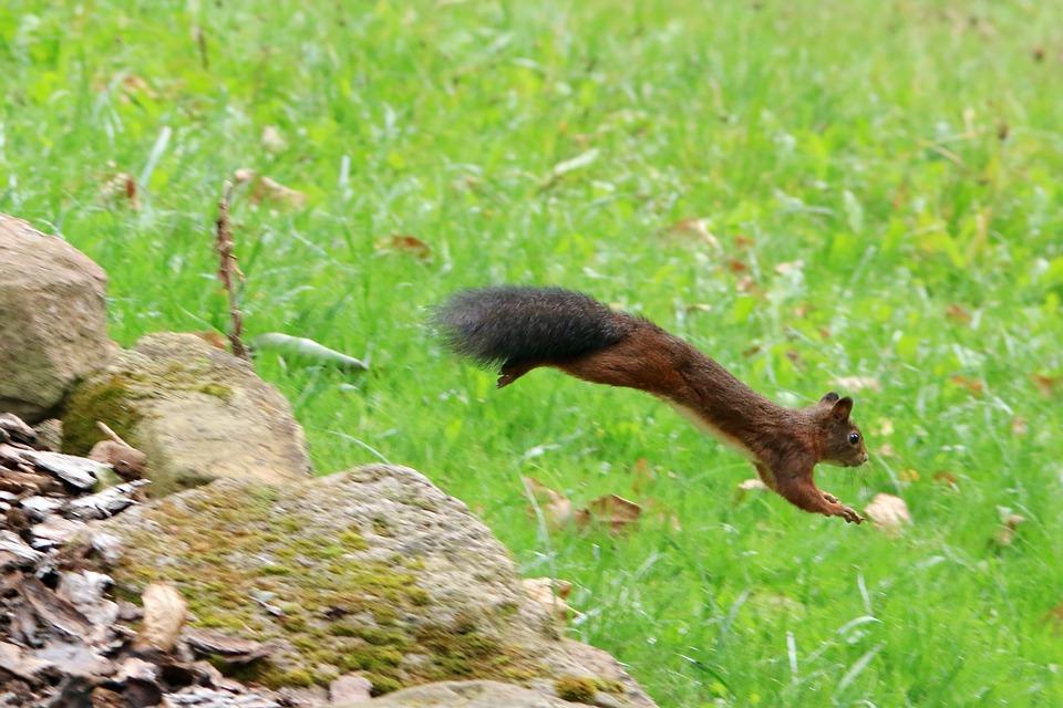 squirrel-3700374_960_720