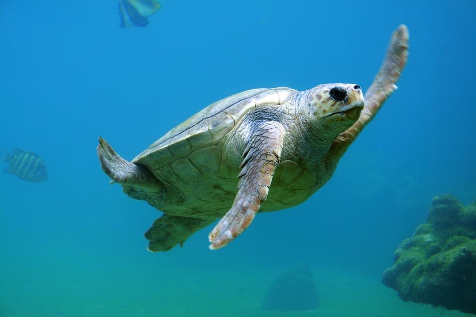 turtle-691040_960_720