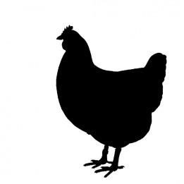 chicken-937584_960_720