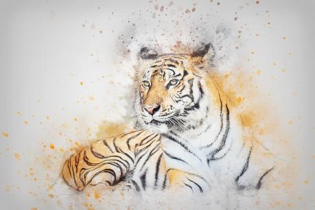 tiger-2573791_960_720