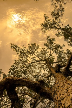 tree-428087_960_720