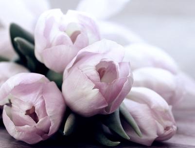 tulips-4072214_960_720