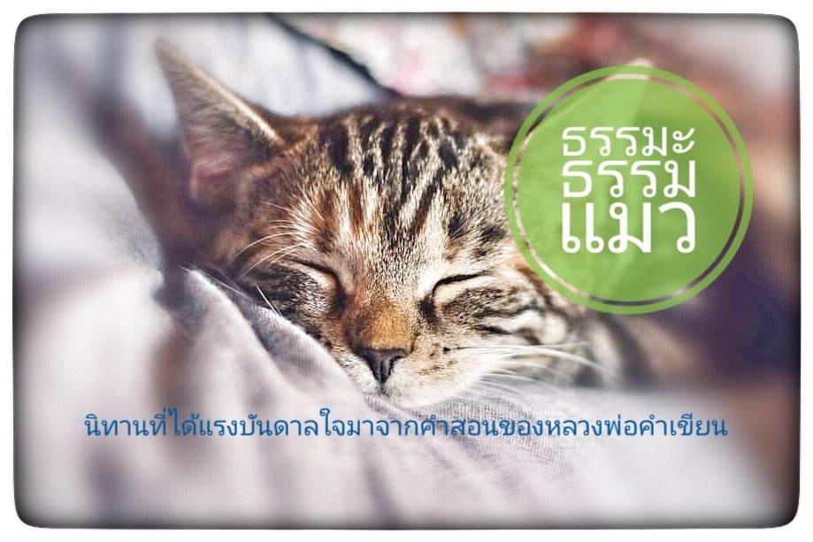 นิทานธรรมะก่อนนอน : ธรรมะธรรมแมว