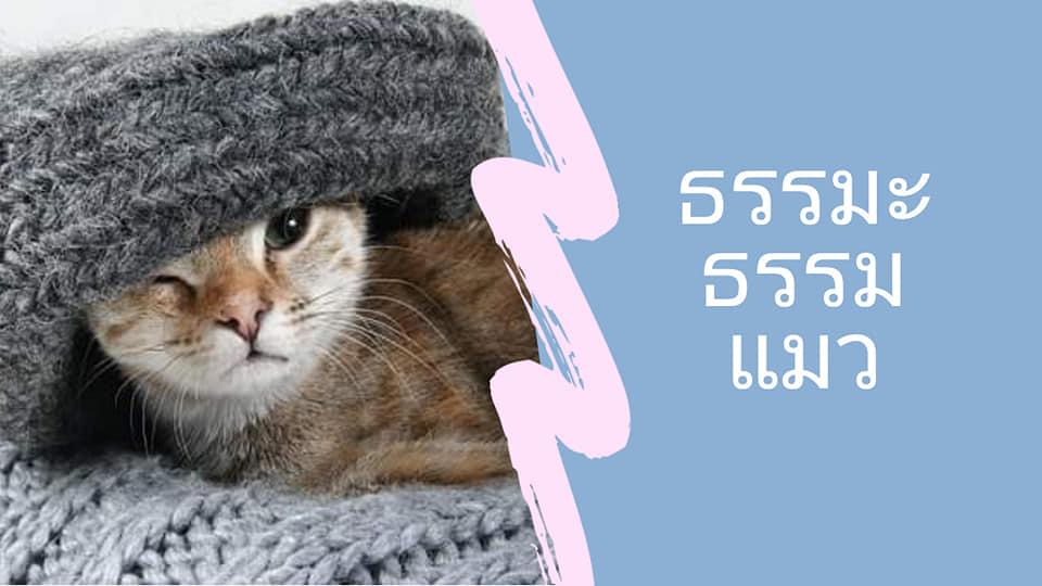 นิทานธรรมะก่อนนอนเรื่อง ธรรมะธรรมแมว