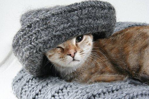 cat-2201460__340