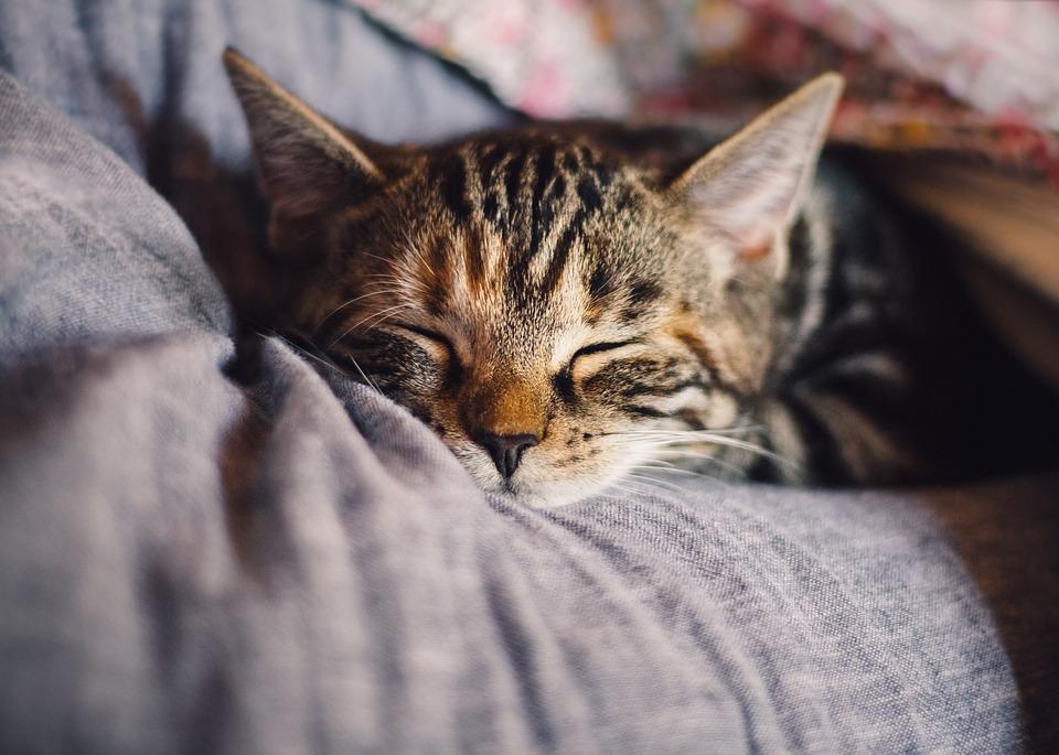 cat-4189697_960_720